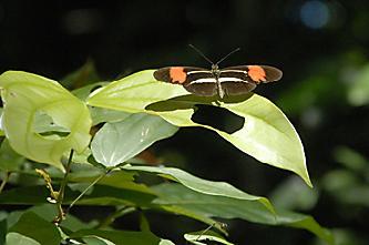Jardim Botânico do Recife - JBR